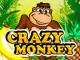Игровые бонусы для Crazy Monkey
